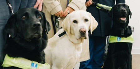 Black guide dog, blond guide dog, and another black guide dog, sitting in a row with their owners standing behind.